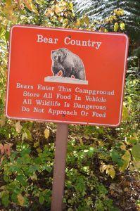 BearCountry