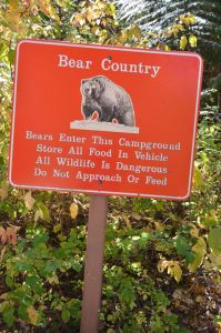 BearCountry