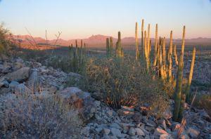 DesertScene2