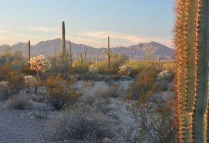 DesertScene3