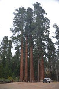 RedwoodsTruck