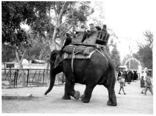 elephantside137-1