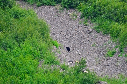 Bear about a thousand feet away on the mountain slope.