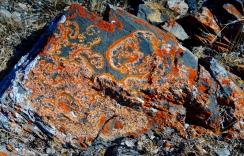 Lichen on the rocks around the campsite.